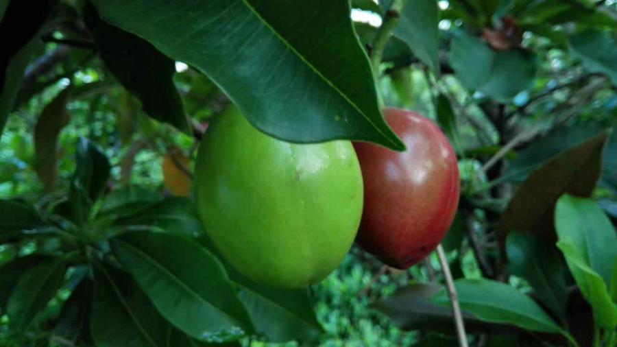 回顾|8月20日红树林生态导赏