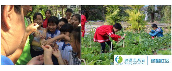 绿趣社区 | 小蜜蜂种植社2017~2018学年第一学期总结